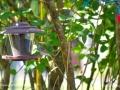 SparrowSJR_0002