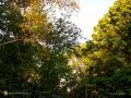 Sunsettrees0616_
