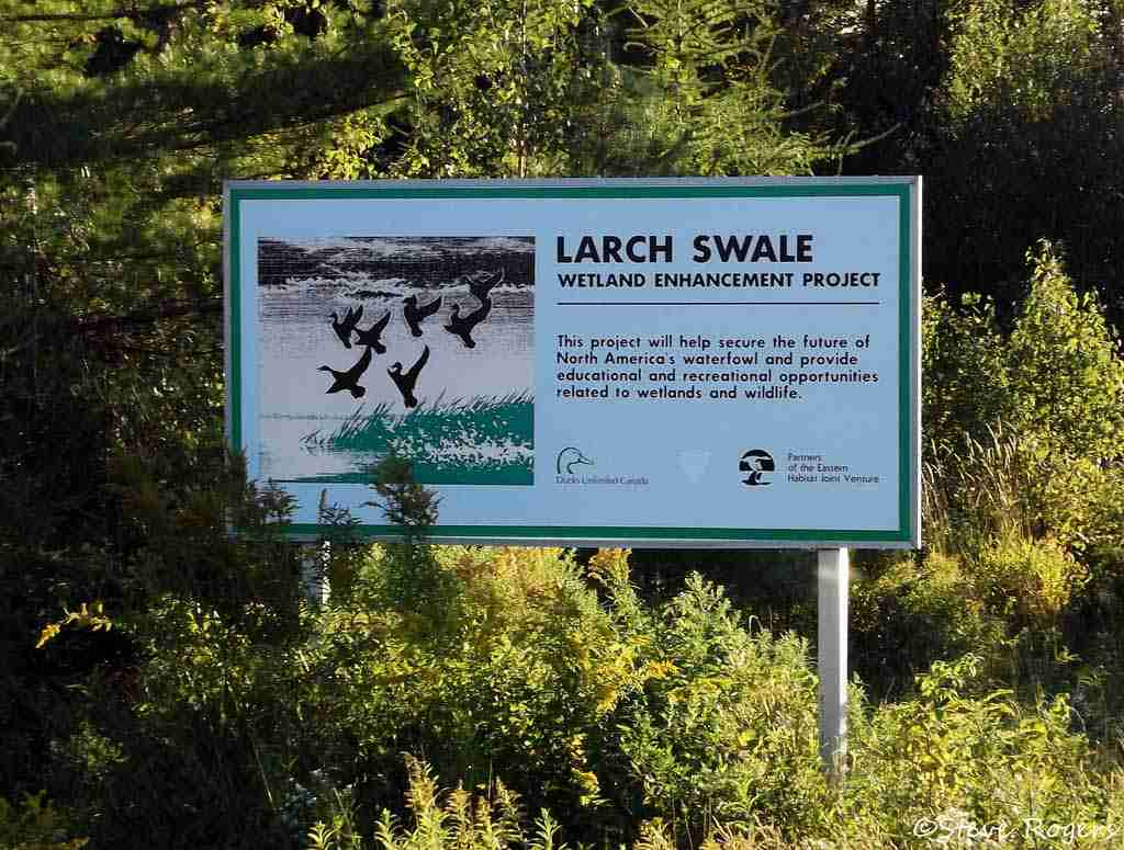 Larch Swale Wetland Environmental Project