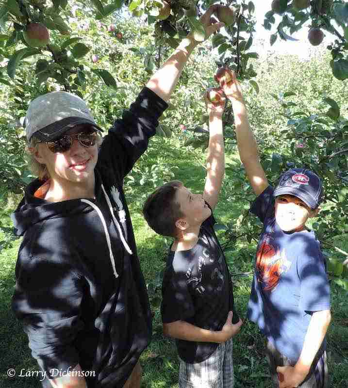 apple picking in the Village of Gagetown - Farming