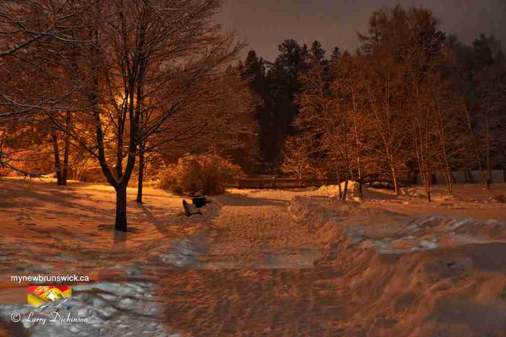 Odell Park Fredericton Winter Night