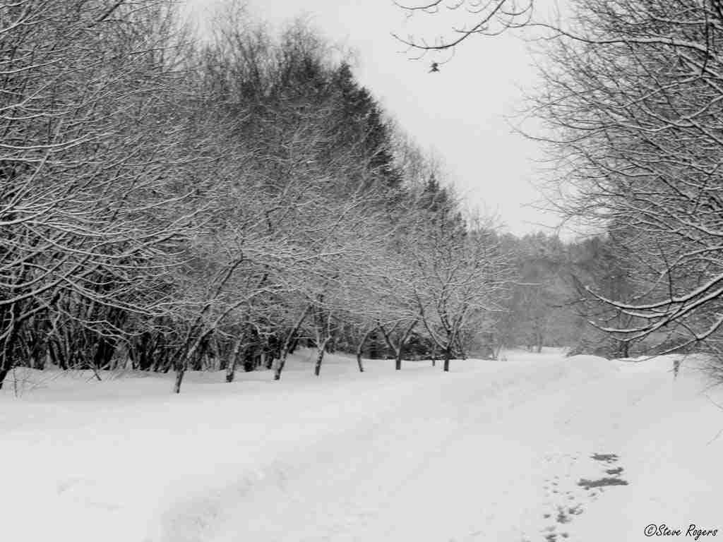 Odell Park in Winter