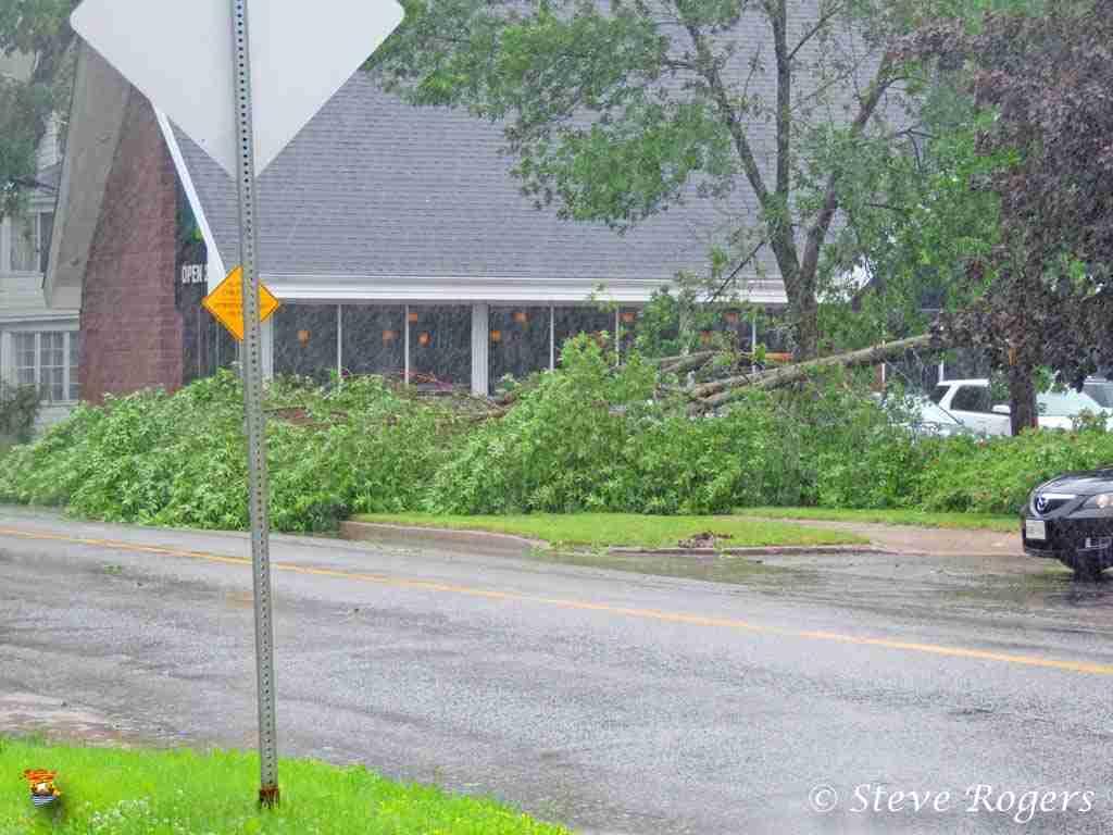 Tree down at the Diplomat