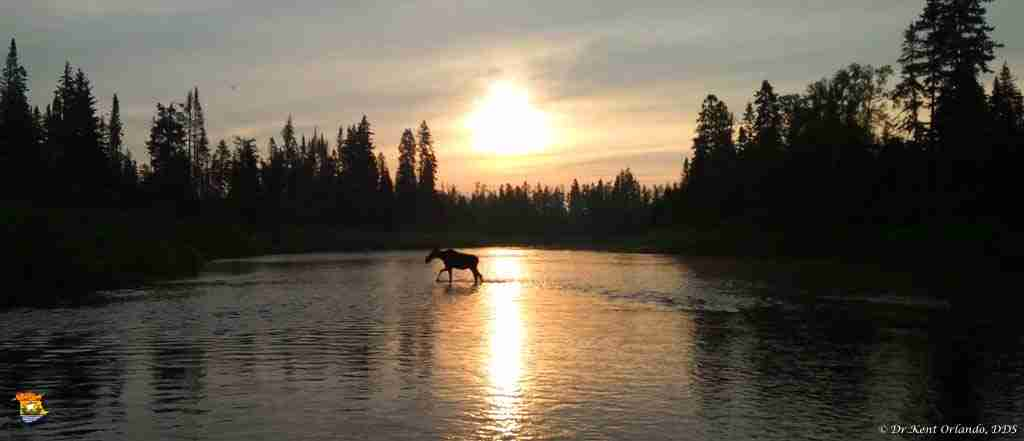 Moose on the Miramichi