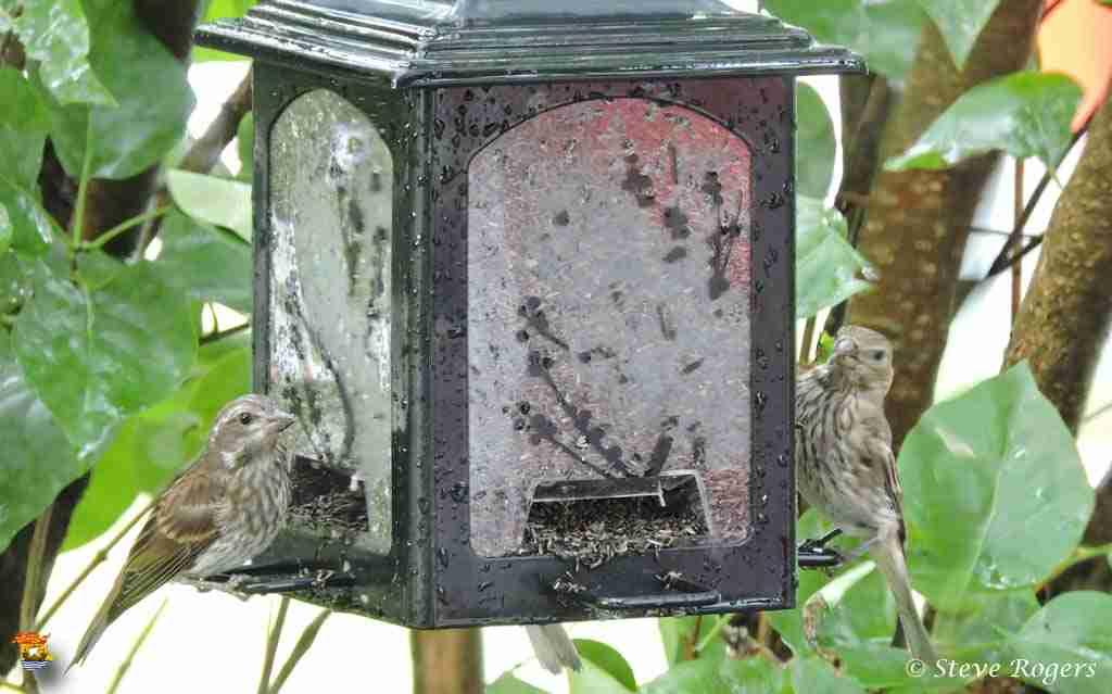 bird005