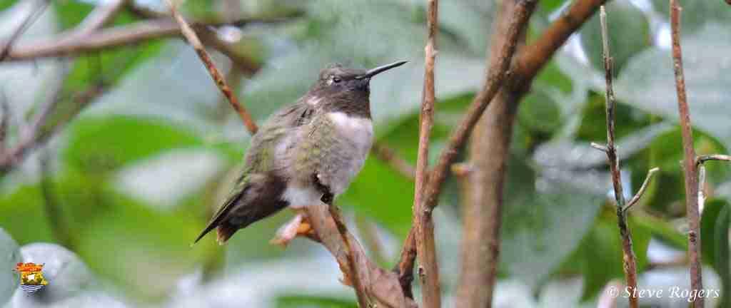 bird010