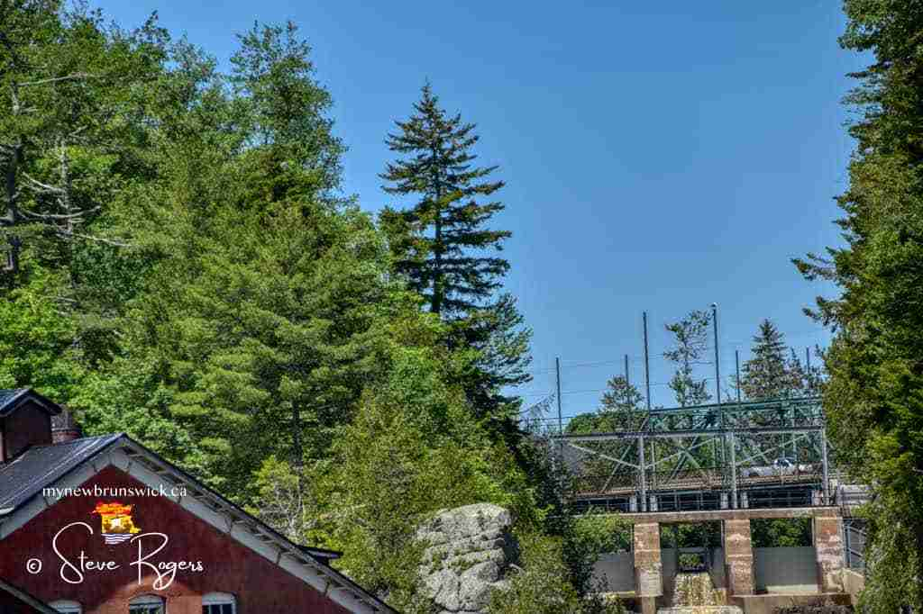 St. George Gorge Pine Tree