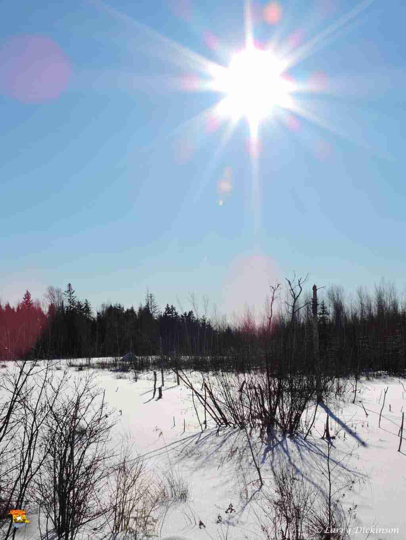 winter walk 011