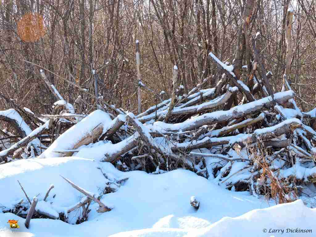 winter walk 013