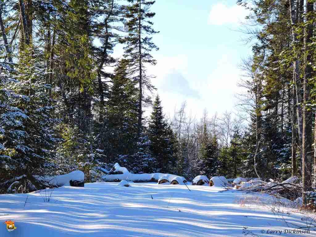 winter walk 016
