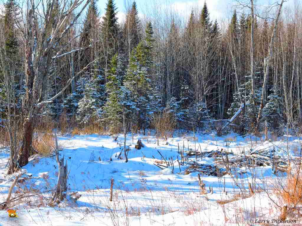 winter walk 019
