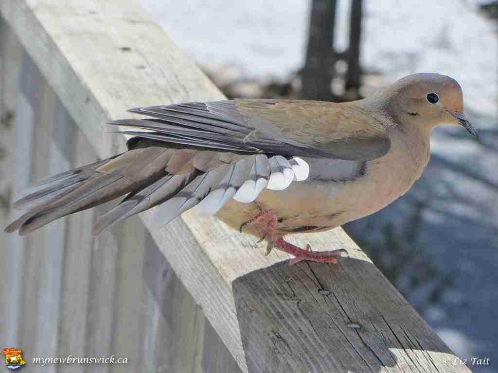 Liz Birds 02