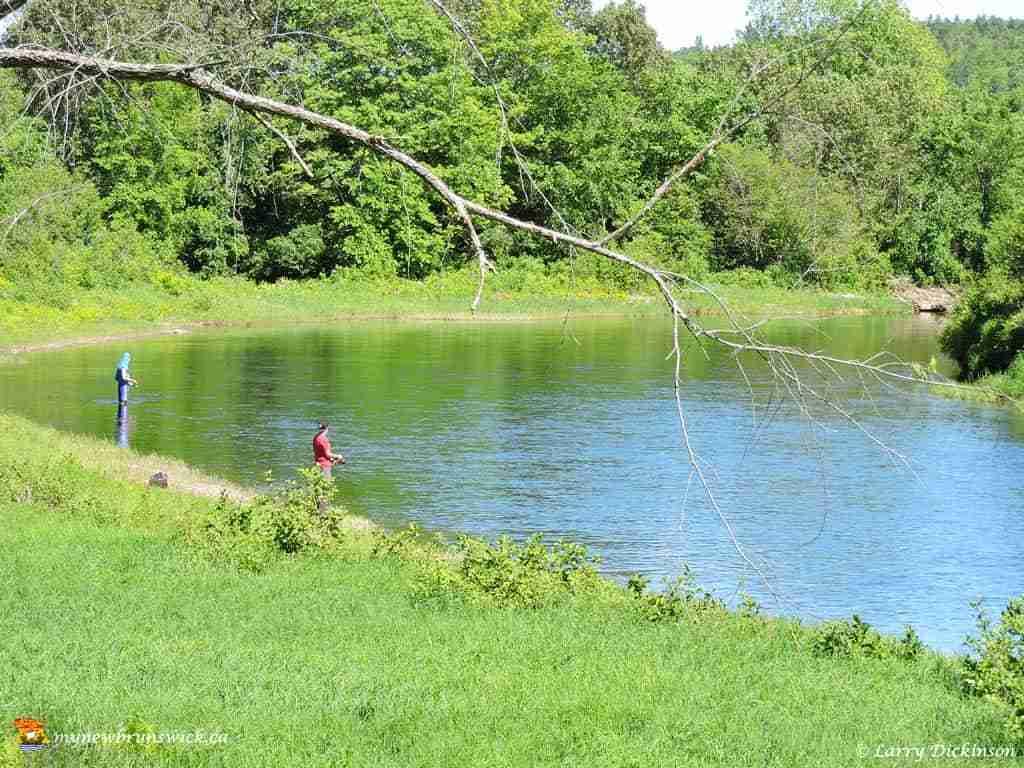 Miramichi river for Atlantic salmon fishing