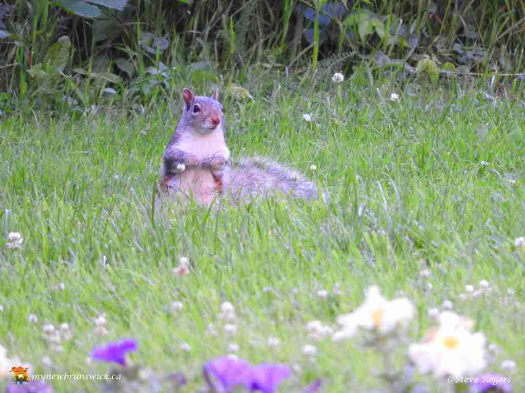 Squirrel 281
