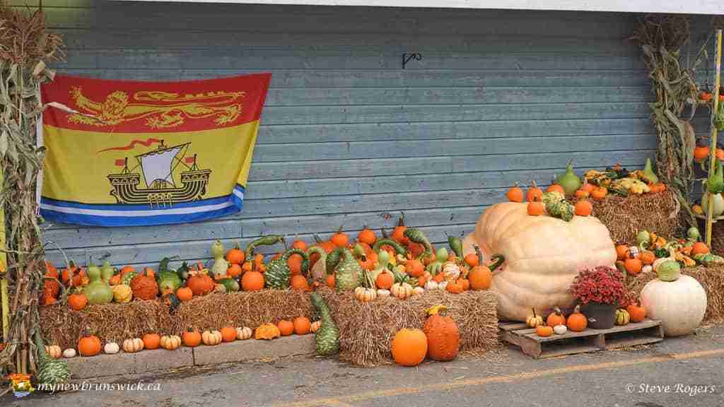 Pumpkin Harvest2015 088