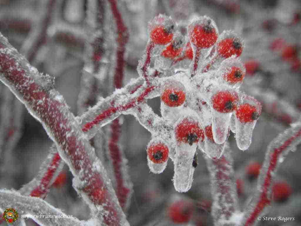 Ice Storm December 2015