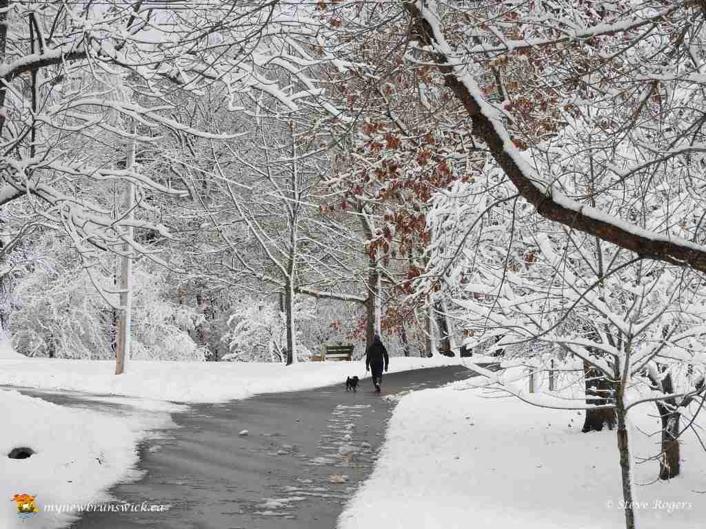 December Snowstorm 2015