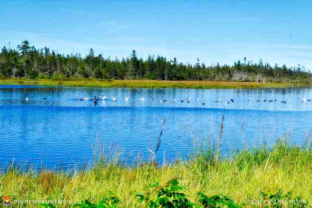 the_anchorage_marsh_ldd_1035_hdr