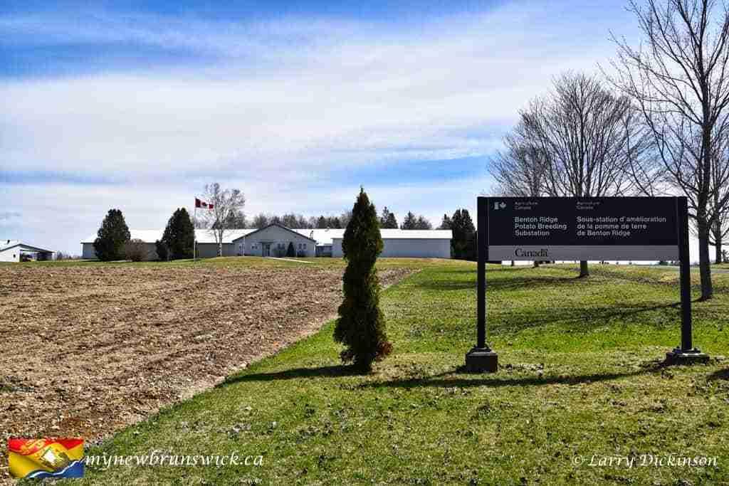 Benton Ridge Potato Breeding Station
