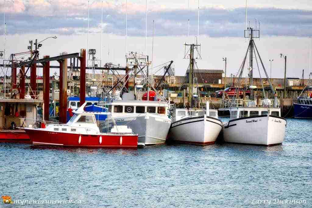 Fishing boats at the North Head Wharf