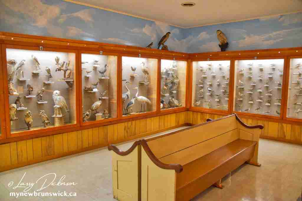 Alan Moses Bird Collection