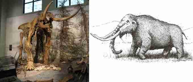 NB Museum Mastodon