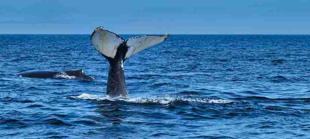 Sea Watch Tours photo